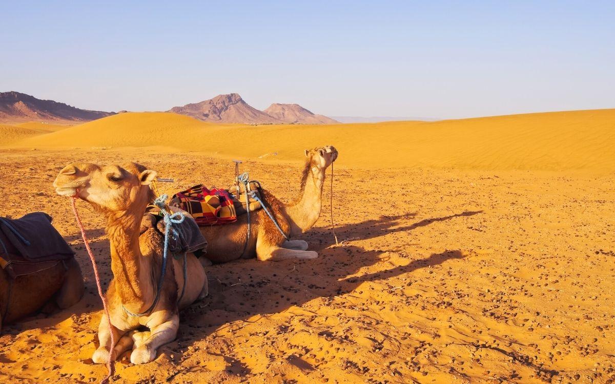 Deserto de Zagora Marrocos