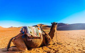 Mhamid Marrocos