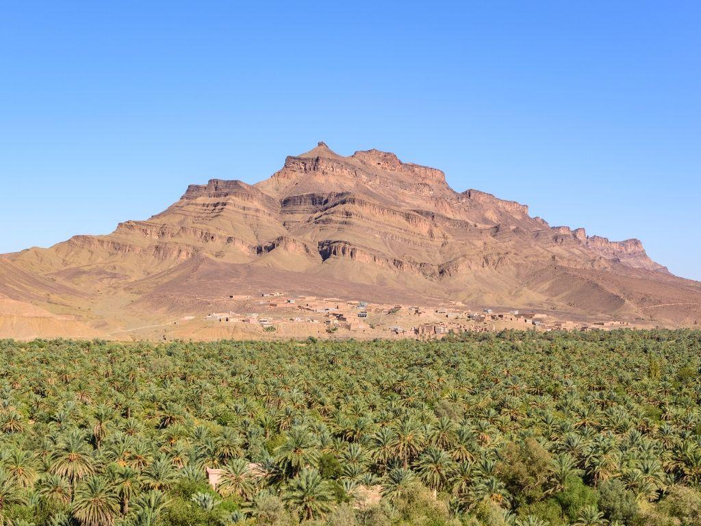Palmeiral de Agdz Marrocos