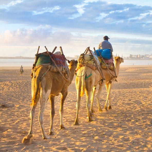 Passeios desde Agadir Marrocos