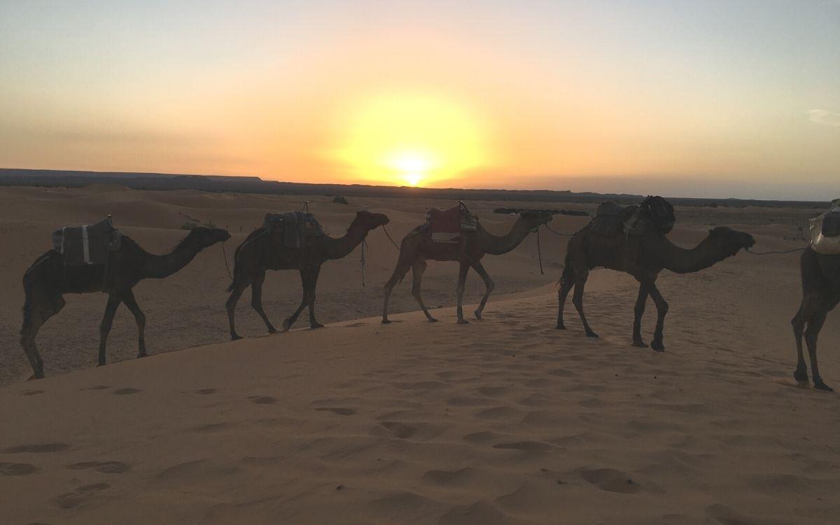 Viagem de 4 Dias - De Marraquexe a Fes pelo Deserto